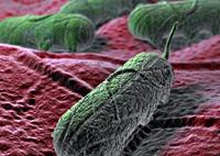 food poisoning salmonella